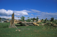 Windstorm Damage to Tree (DI01169)