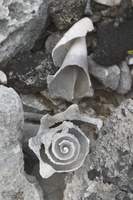 Shell on a beach at RICO (DI01310)
