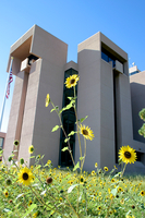 Mesa Laboratory with sunflowers (DI01438)
