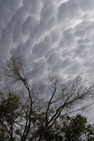 Mammatus cloud (DI01444), Photo by Carlye Calvin