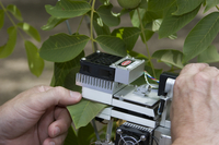 Measuring emissions of volatile organic compounds from the leaves of a walnut tree (DI01676)