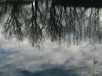 Reflections of clouds and trees (DI01711)