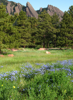 Colorado wildflowers (DI01761)