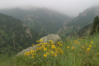 Fog and wildflowers (D101770)