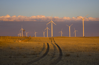 Wind farm in late afternoon (DI01920)
