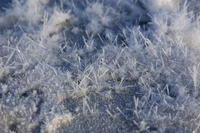 Close-up of frost flowers (DI01962)