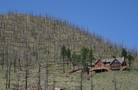 The Hayman Fire area eight years later (DI02191)