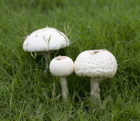 Mushrooms (DI02195)