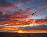 Sunset in the Drake Passage (DI02285) Photo by Andrew Watt