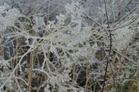 Ice storm (DI01570), Photo by Carlye Calvin