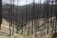 The Fourmile Fire burn area (DI02495)