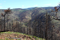 The Fourmile Fire burn area (DI02496)