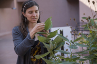 Scientist studies the effects of ozone on plants