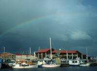 Rainbow, Hobart Harbor, Tasmania (DI00375), Photo by Carlye Calvin