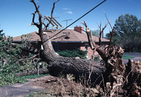 Wind: damage in Colorado (DI00554), Photo by Carlye Calvin