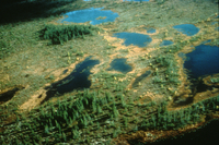 Bogs surrounding Hudson Bay: site of the Canadian northern wetlands study (DI00069), Photo by Lee Klinger