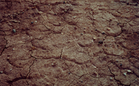 Dried Mud (DI00818), Photo by Vanessa Carney