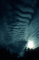 Altocumulus undulatus (DI00869), Photo by Caspar Ammann